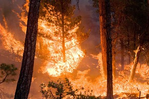 Fast-Growing Milepost 97 Fire Draws Hundreds To Glendale