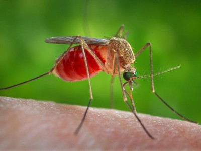 Small Rash Of West Nile Virus In Eastern Oregon