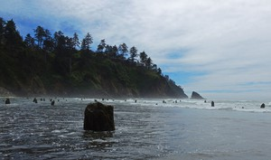 A ghost forest of tree stumps emerges at low tide near Neskowin in Tillamook County. The trees are believed to be the remnants of forests growing before the last major earthquake and tsunami hit.