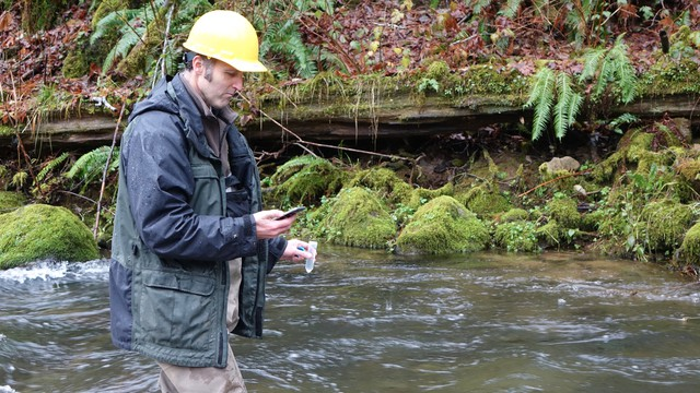 ODFW biologist Shaun Clements counts down the seconds before emptying a vial of synthetic DNA into a stream near Alsea, Oregon.