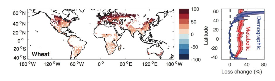 For each degree the earth warms, insects could consume 25% more wheat than they already do. By the end of the century, losses due to insects could double. The red areas of the map show where wheat losses due to insects are projected to increase.