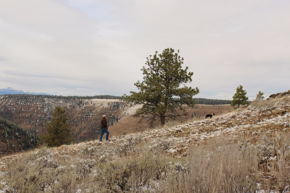 Wallowa County rancher Todd Nash and a cattle dog hike up a slope in Eastern Oregon. Many ranchers say the presences of wolves makes it more difficult to use herding dogs. Some research indicates guarding dogs could deter wolves from attacking livestock.