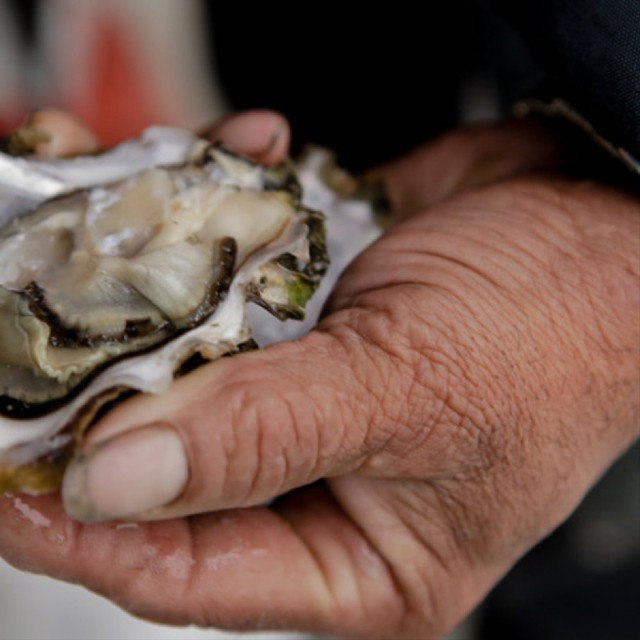 Washington oyster growers seek to use a pesticide that controls burrowing shrimp in oyster beds.