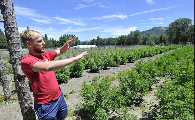 Michael Johnson, COO of Siskiyou Sungrown Farms, is considered one of the responsible marijuana growers in Williams, Oregon, but residents say large-scale, corporate-owned farms are causing problems.