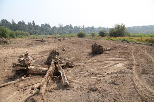 A restoration project is excavating side channels to connect the Willamette River with a lagoon in the Oaks Bottom Wildlife Refuge. Large pieces of wood have been placed in the channels to provide shady hiding places for salmon and other fish.