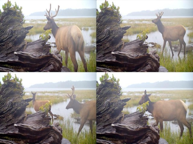 """Artist Malia Jensen's """"Nearer Nature"""" project utilized 18 motion-triggered field cameras to gather images of wildlife."""