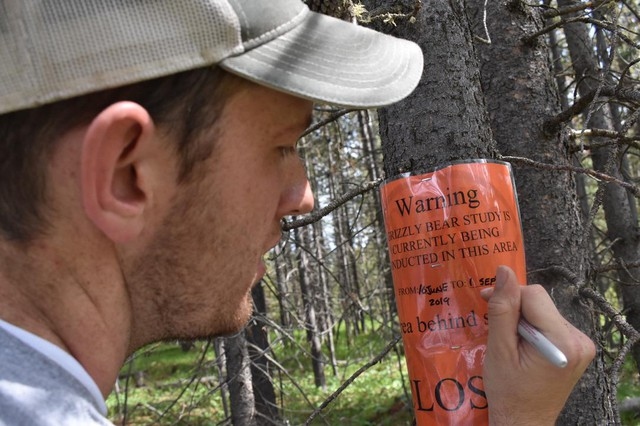 Kyle Garrett, with The Idaho Department of Fish and Game, puts up warning signs in the area of a grizzly bear study near Yellowstone National Park. Hunters on the fringes of Yellowstone have been shooting grizzlies in self defense.