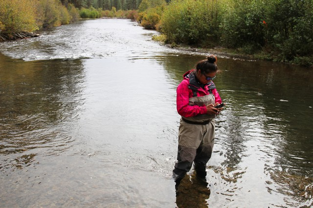 Fish technician Mystina Spinl-McCormack plugs in GPS coordinates to mark the location of a salmon redd on the Warm Springs River.