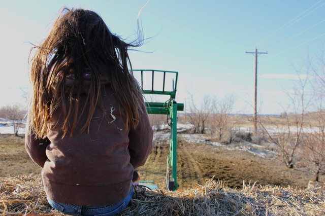 Madeleine Johnson rides atop hay bales as her brother Benjamin drives the tractor to feed the cows early one February morning.