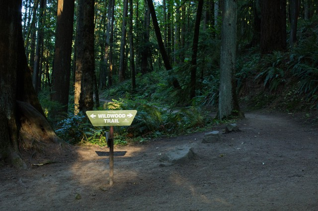 Tucked into the northwest corner of Portland, the Wildwood Trail weaves for more than 30 miles through Forest Park.