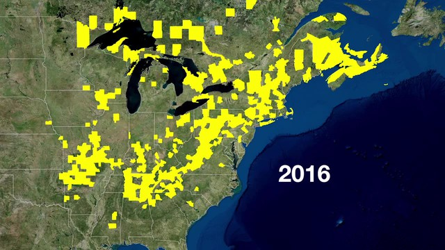 Between 2006 and 2016, white-nose syndrome had spread from New York state across much of the Northeast. Source: Whitenosesyndrome.org