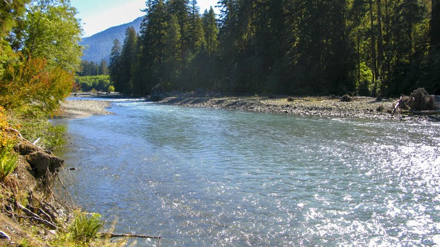 The Hoh River in Olympic National Park.
