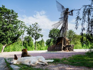 """""""Fallout Dogs,"""" Julia Oldham's experimental film about the stray dogs of Chernobyl, is on view at the Portland Pataphysical Society until February 17."""
