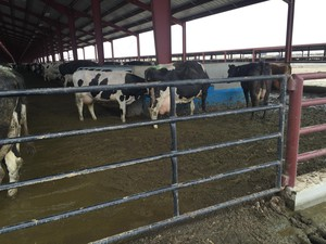 A controversial dairy in Oregon has been cited for numerous manure and waste violations.
