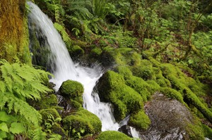 Voters in Hood River County approved a measure to block a proposal to bottle water from Oxbow Springs in Cascade Locks.