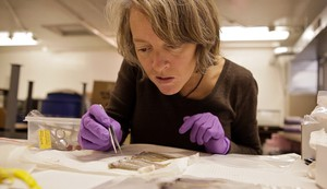 Jenifer McIntyre, WSU researcher, scrutinizes juvenile coho salmon that had been exposed to stormwater in this 2012 file photo.