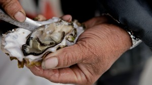 Pacific Oysters are most vulnerable to corrosive waters during their first few days of life at the time when forming shells are critical to their survival.