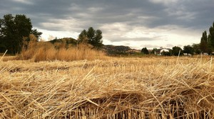 Organic wheat in Jackson County, Oregon. Voters in the county chose to ban GMO crops in 2014