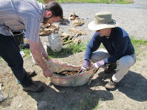 Nate Forst with Tomolla Consulting, left, and Mike Slater of the EPA wrap a mixture of mushroom spawn and bark mulch in a burlap sack.