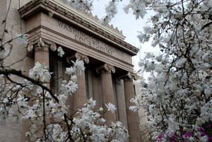 Blossoms bloom in front of the Washington County Courthouse.