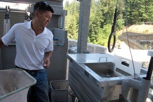 PGE biologist Tim Shibahara counts salmon that have come through the fish collector at the River Mill Dam.