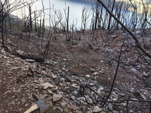A view of damage to the Angel's Rest trail from the Eagle Creek Fire.