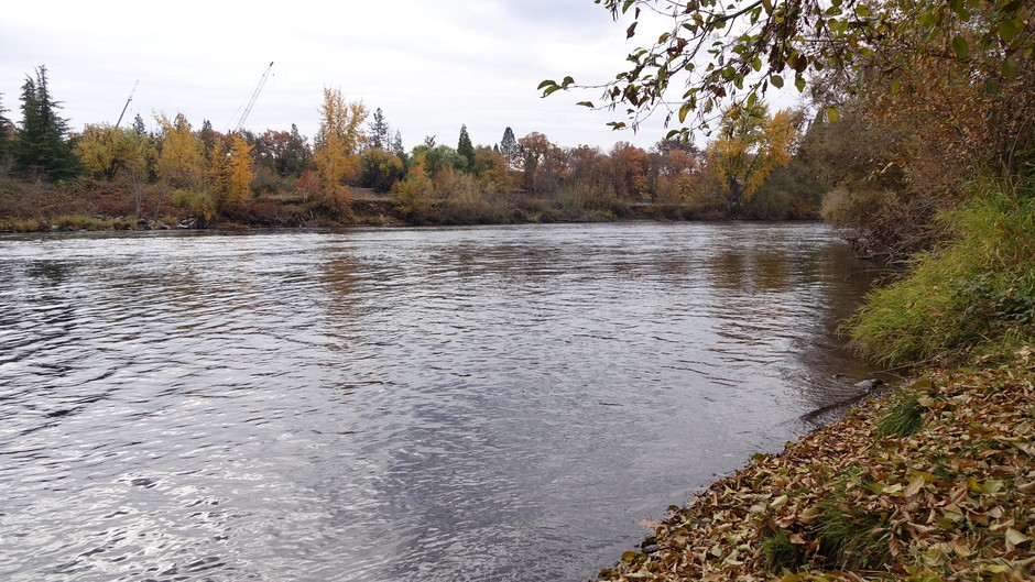Rogue River just upstream of Medford's wastewater treatment plant.