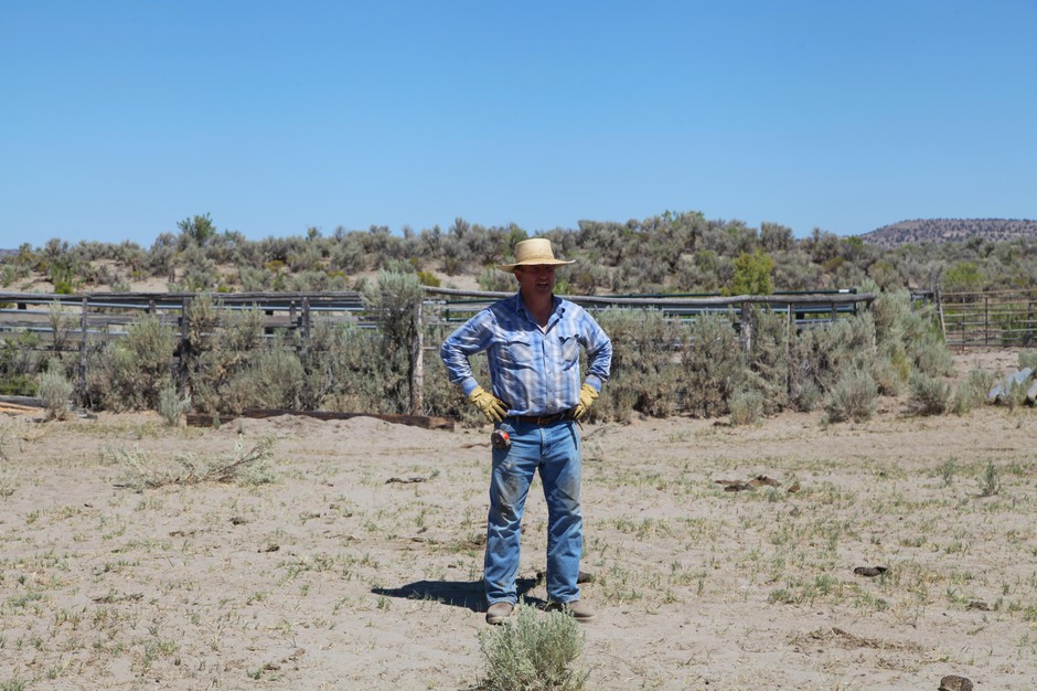 Harney County rancher Scott Franklin has about 40 cattle and calves on this plot of land. In the distance is the headquarters of the Malheur National Wildlife Refuge. Franklin's family has ranched in Harney County for generations.