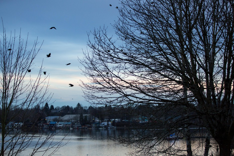 Crows fly north toward downtown Portland, Oregon, Thursday, Jan. 3, 2019.