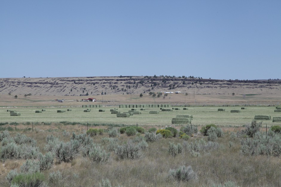 Hay bales in Harney County, Oregon on July 20, 2018.