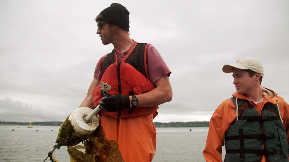 Brian Allen (left) and Ryan Cox of the Puget Sound Restoration Fund pull kelp lines on Hood Canal.