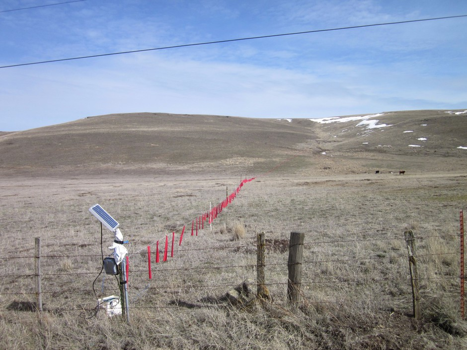 The use of non-lethal techniques like hanging fladry, shown here in red, can deter wolves from cattle or sheep pastures. But ranchers say they are costly, time-consuming and marginally effective. Wolf advocates say they are too seldom used or used improperly, like the incomplete line in this photo from Eastern Oregon.
